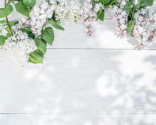Blooming Lilac Flowers On The ...