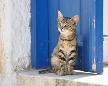 Cute Young Tabby Stray Cat In ...