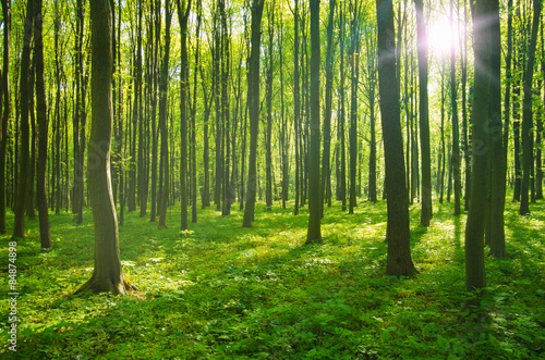 Foto op Canvas Bos forest in spring