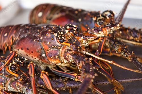 Macro of lobster head