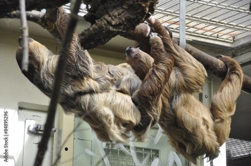 Fotografie, Obraz  Zoo