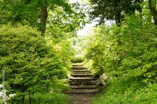 Foto op Plexiglas Weg in bos 森の小道