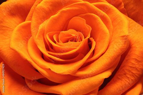 Tematy naklejek na wymiar zamknij-sie-piekna-roza