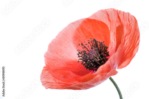 Deurstickers Klaprozen Poppy flower close-up