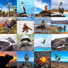 Set Of Famous Places And Animals Of Galapagos Islands, Ecuador