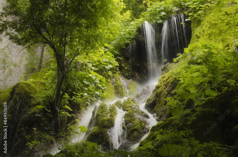 Fototapety, obrazy: waterfall and dense vegetation in green forest