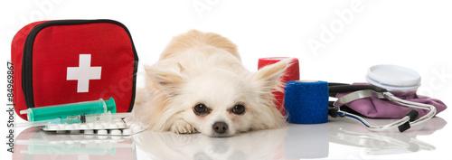 Fotografia  Kranker Hund