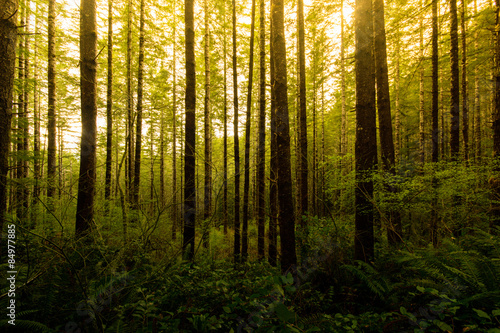Fotografie, Obraz  Line of lush green trees standing along a trail in Drift Creek Falls, Oregon