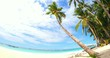 Coastal resort with palm trees and sandy beach