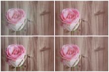 Rosen, Collage