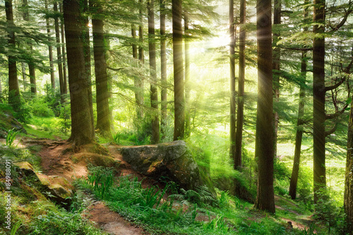 Photo  Sunrays falling into a vibrant green forest