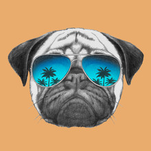 Hand Drawn Portrait Of Pug Dog With Mirror Sunglasses. Vector Isolated Elements