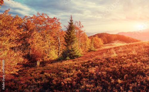 Foto op Canvas Baksteen rock massif in the Carpathians. Retro style filter. Instagram to