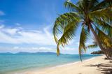 Plaża i kawałek palmy