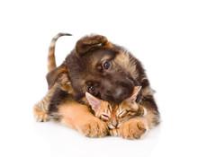 Funny Puppy Bite Kitten. Isola...