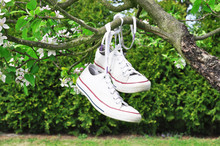 Canvas Shoes Hanging On A Tree