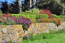 Fleurs Vivaces De Bretagne Sur Un Mur De Granit