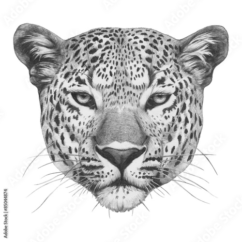 Photographie  Original drawing of Leopard. Isolated on white background.