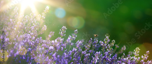 Poster Olive art Summer or spring beautiful garden with lavender flowers