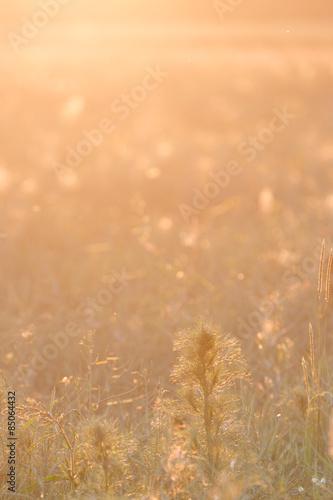 Fotobehang Natuur Goldener Sonnenuntergang in der Natur