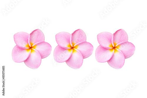 Obraz na plátne Close up pink frangipani flower isolated on white