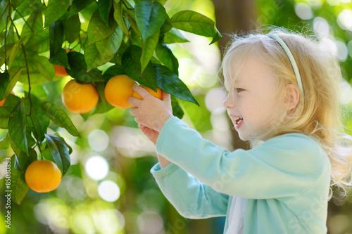 Fotomural Adorable little girl picking fresh ripe oranges
