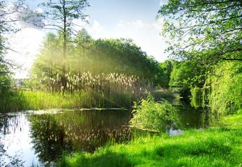 Fototapeta Dry reeds on river