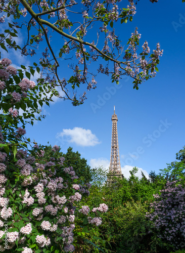 Photo  Eiffel Tower and colorful blossoming trees, Paris