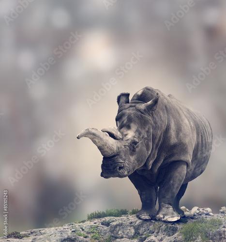 Poster de jardin Rhino White Rhinoceros