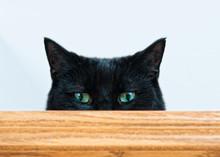 Mischievous Black Cat