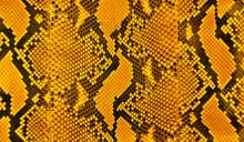 Snakeskin Stripes Pattern