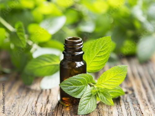 Fototapeta Natural Mint Essential Oil in a Little Glass Bottle obraz