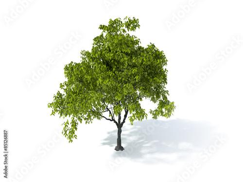Fotografia, Obraz  tree on a white background