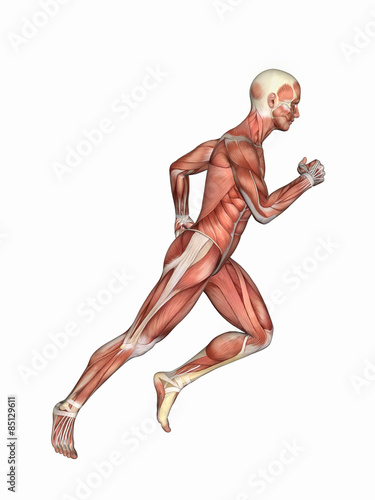 Anatomy of Male in Running Motion: Featuring male figure in running ...