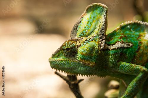 Staande foto Kameleon portret green chameleon on the plante