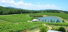 Vineyard North Georgia, USA