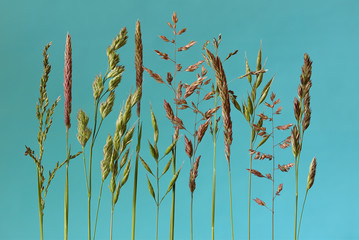 verschillende bloeiende grassen op een blauwe achtergrond