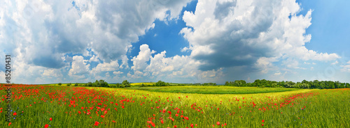Foto op Plexiglas Landschappen Panorama of summer countryside with red poppies and thunderstorm clouds