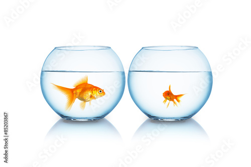 Fotografie, Obraz  big and small goldfish in a fishbowl