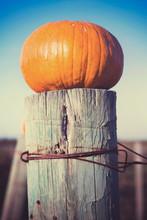 Pumpkin On A Fencepost