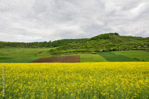 Photo Stands Melon Beautiful landscape of a yellow field rapeseed in bloom and green hills under a cloudy sky