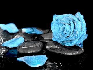 Obraz na SzkleBlue rose