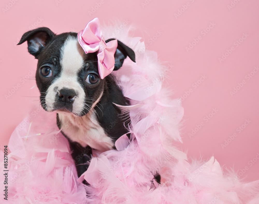 Fototapety, obrazy: Pretty In Pink