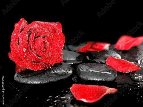 Obraz w ramie Red rose