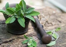 Fresh Sage In A Mortar
