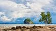 Tree on Seashore