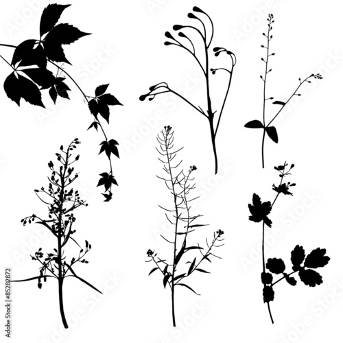 Obraz na plátně Different plants silhouettes on white background