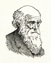 Charles Darwin, English Natura...