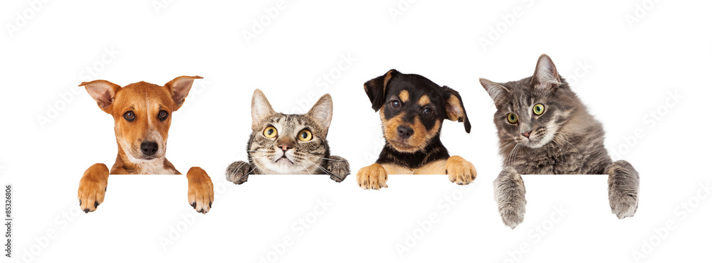 Fototapeta Dogs and Cats Hanging Over White Banner