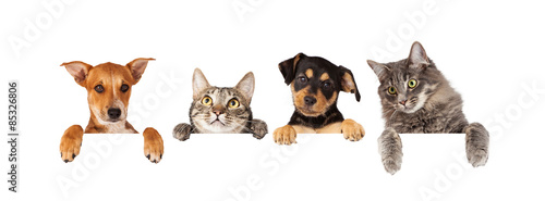 Poster de jardin Chat Dogs and Cats Hanging Over White Banner